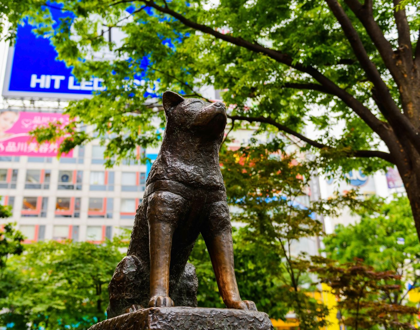 Hachiko Statue | The Official Tokyo Travel Guide, GO TOKYO