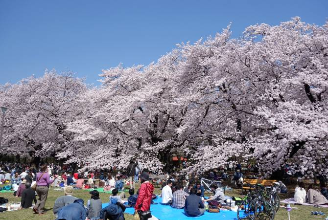 datant de fleur de cerisier