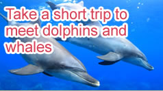 Take a short trip to meet dolphins and whales