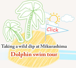 Taking a wild dip at Mikurashima Dolphin swim tour